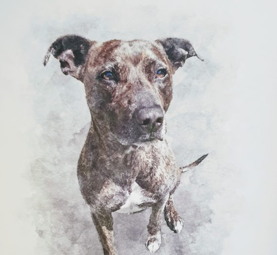 Pet Portrait from Created by Magic – Review & Giveaway!